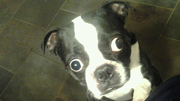 10 facts about Bruschi, the dog with the largest eyes