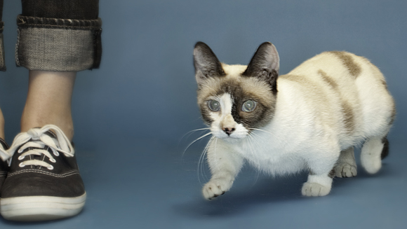 smallest cat in the world guinness 2013 - Biggest Cat In The World Guinness 2014