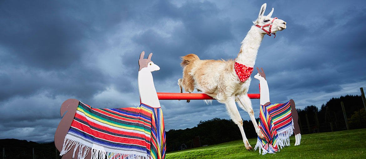 Caspa the Llama reaches amazing heights in the new Guinness World Records 2017 book