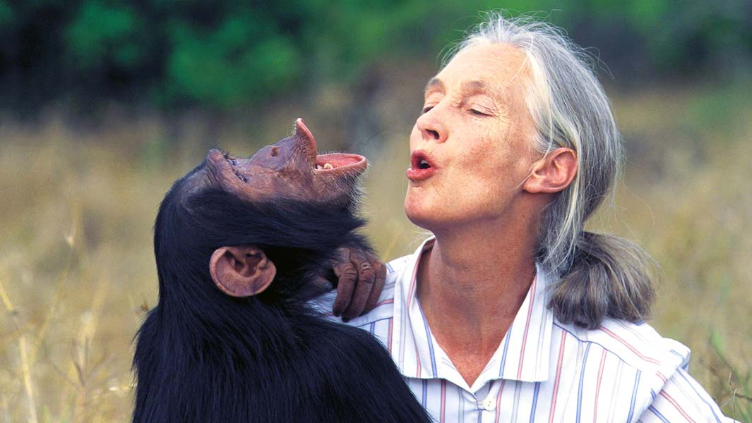 Jane Goodall's pioneering chimp research recognized with GWR titles