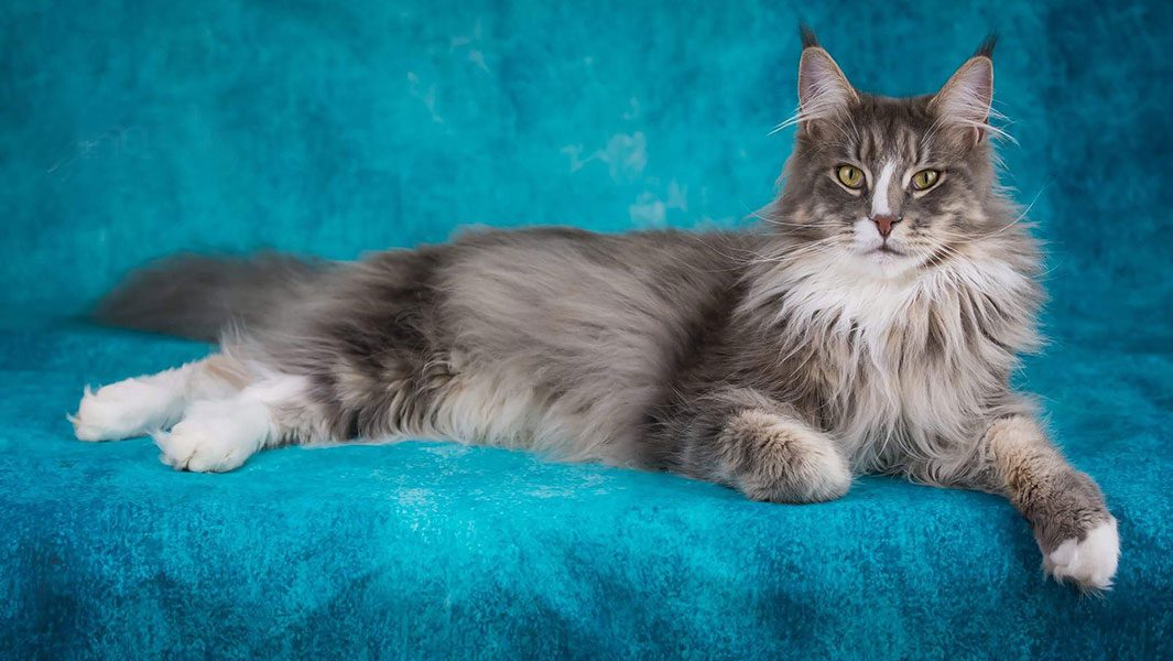 Meet the adorable cats and dogs starring in the Amazing Animals Fluffytorium