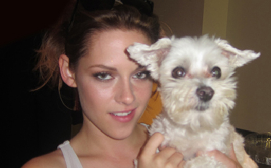 Lucky Diamond, the dog snapped with most celebrities dies‎ at 15