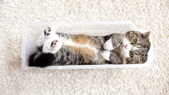 Video: Meet Maru 'Mugumogu' - the cardboard box-loving, record-breaking cat