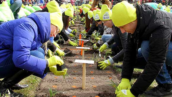 Residents of Ventspils, Latvia plant 1,293 flowers for world record attempt