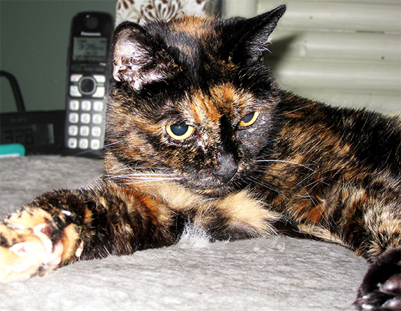Oldest cat living - Tiffany Two - Guinness World Records body image