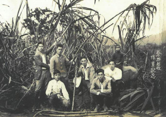 Chitetsu at a sugar cane farm