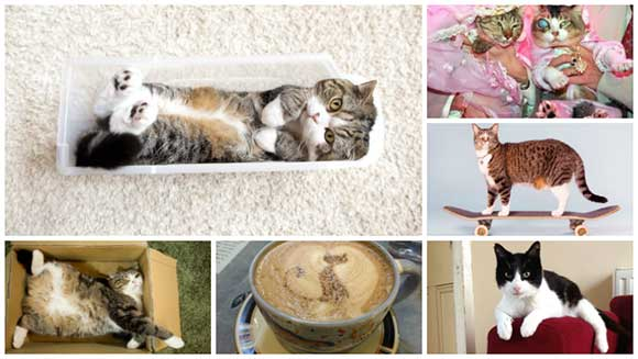 International Cat Day: A timeline of the world's most fascinating feline record breakers