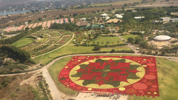 Video: Largest carpet of flowers record broken in Mexico