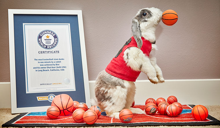 Most basketball slam dunks by a rabbit