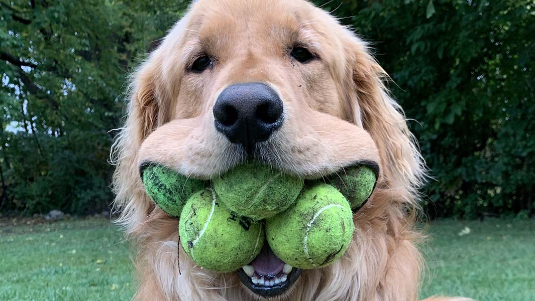 This good boy loves tennis balls so much he broke a record