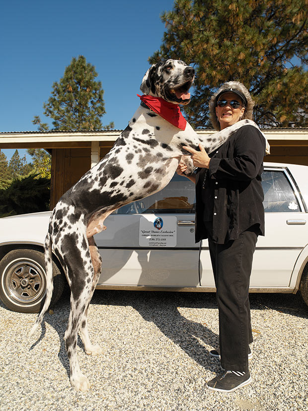 Gibson-former-tallest-dog-guinness-world-records-60th-website4