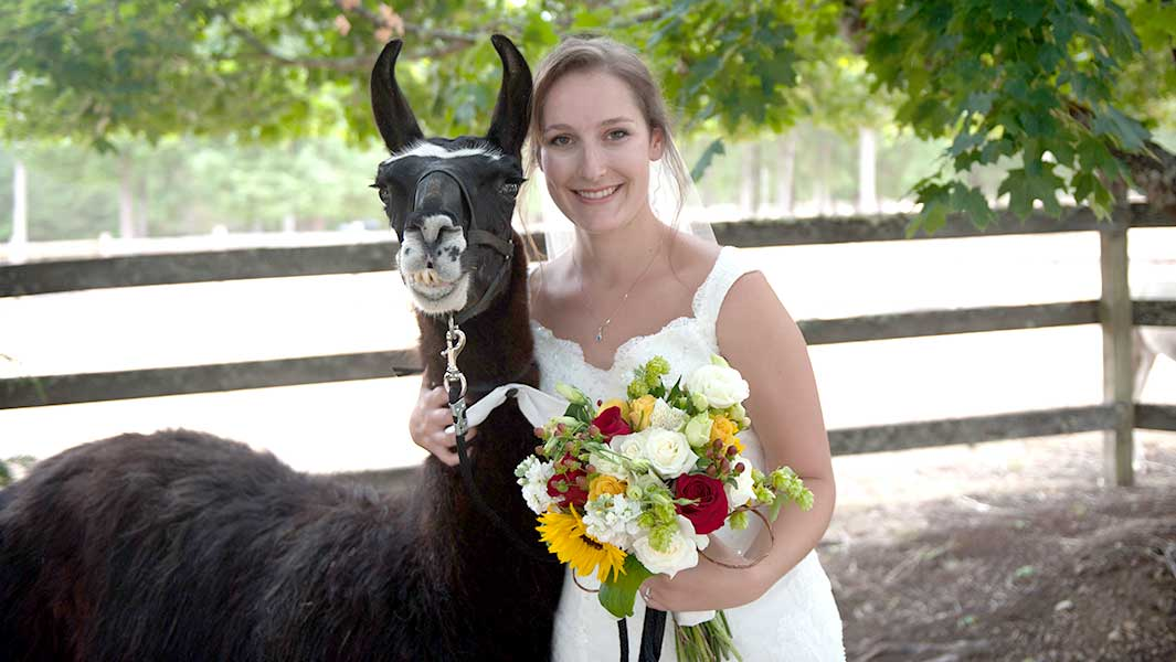The world's oldest llama and his 'life of luxury' on a Washington farm