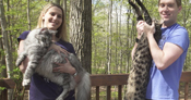 Cygnus and Arcturus - the cat with the longest tail ever and the tallest cat ever - lived together