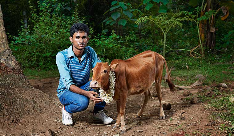 Manikyam from India is the world's shortest cow