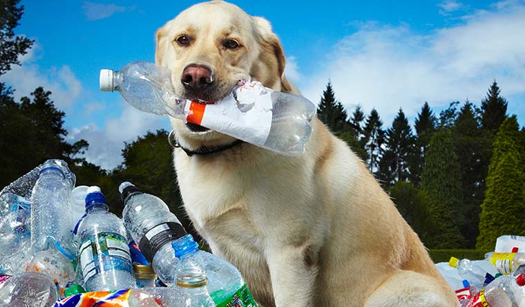 The record for Most bottles recycled by a dog is held by Tubby the Labrador