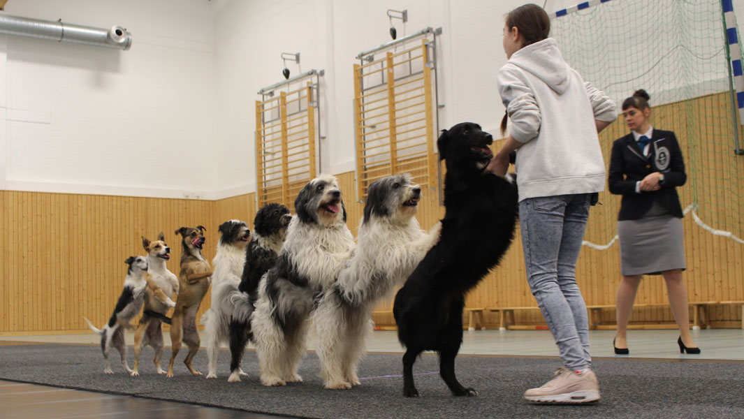 Alexa Lauenburger: the wunderkind who taught dogs to conga and more