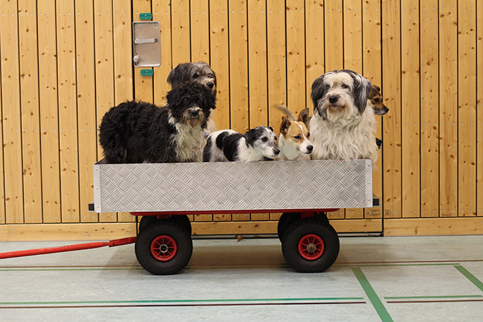 In between tricks, the pack hang out patiently in a wagon, waiting for their turn to shine