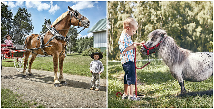 The world's tallest living horse – Big Jake from Wisconsin, USA – stands almost four times the height of Bombel!