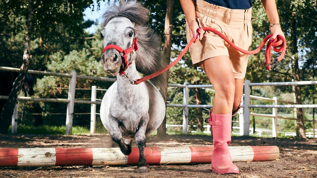 Meet the smallest horse in the world that's shorter than a greyhound