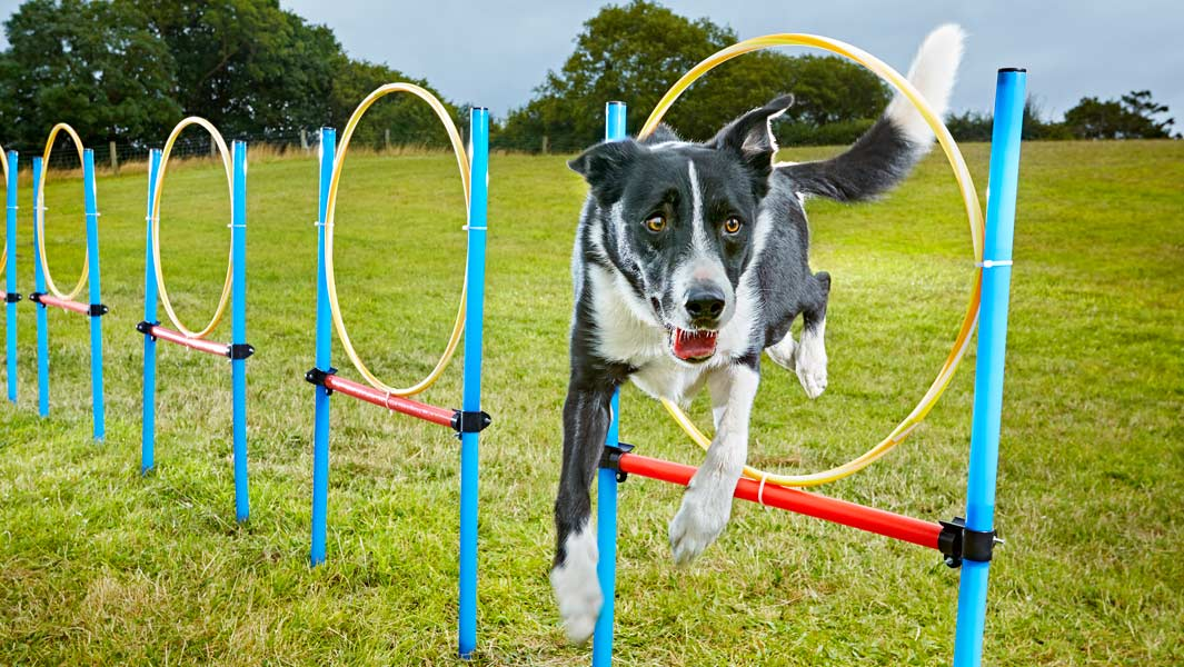 The talented dogs with superlative skills: could YOUR pooch's top trick be worthy of a record?