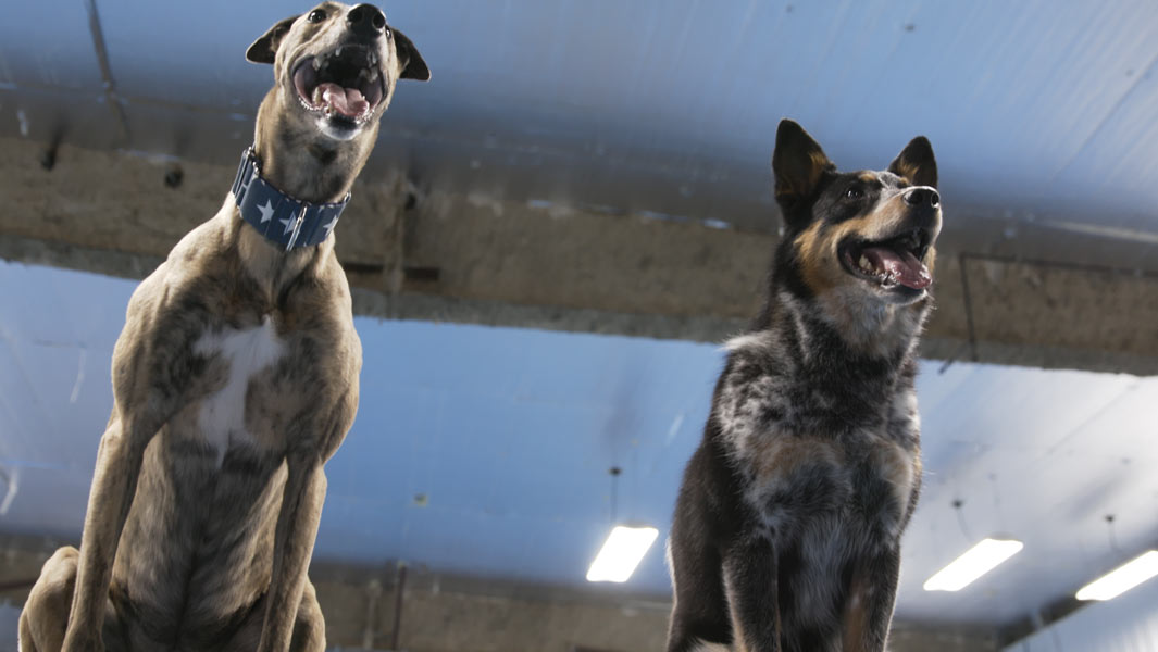 Video: Meet the two rescue dogs who have become record breaking masters
