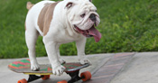 Otto has held the record for the longest human tunnel traveled through by a skateboarding dog