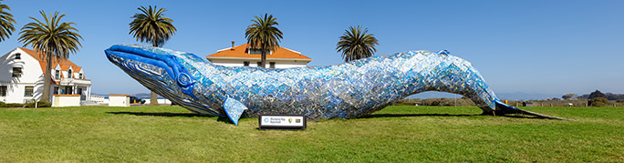 Recycled plastic whale San Francisco
