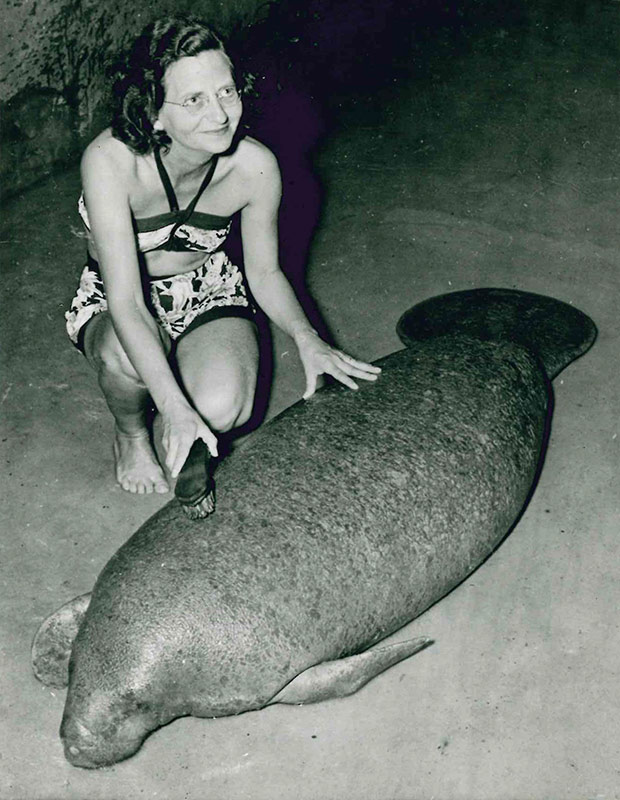 snooty-manatee-1958-guinness-world-records