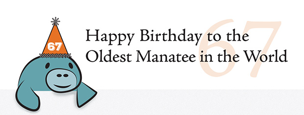 snooty_cartoon_67_partyhat-oldest-manatee
