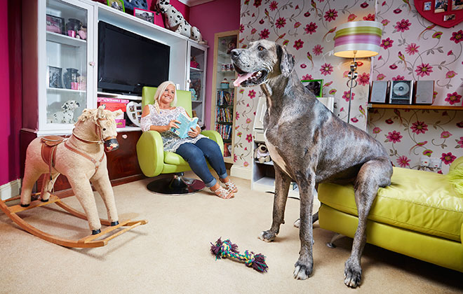 Tallest dog living – male