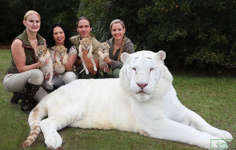 First white ligers