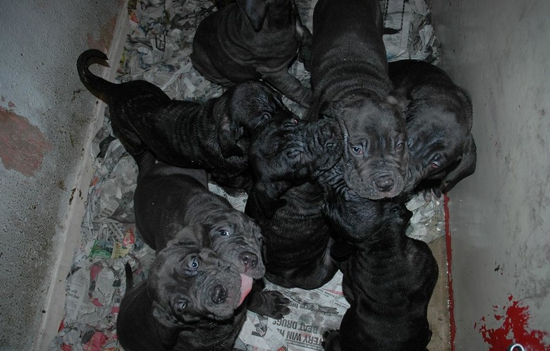 Largest litter of dogs