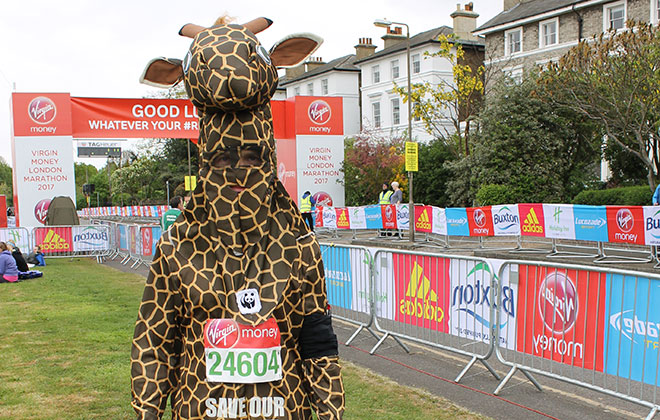 Fastest marathon in a full-body animal costume (male)