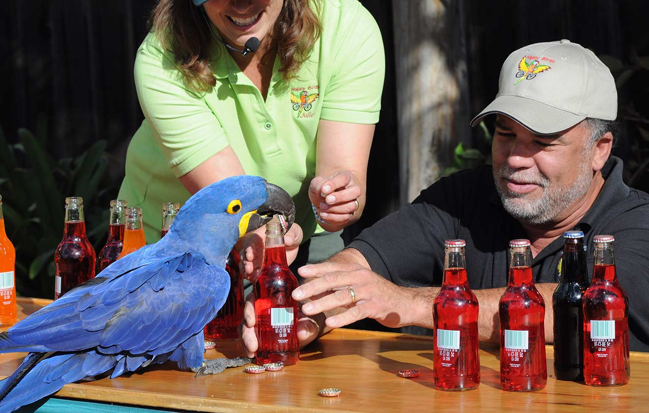 Most bottle caps removed by a parrot in one minute