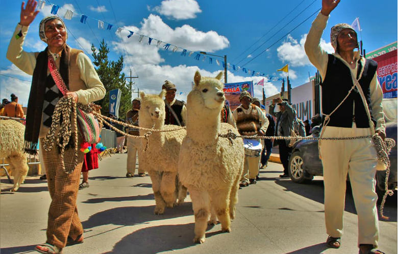 Largest parade of alpacas