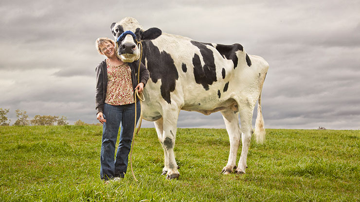 Tallest cow ever